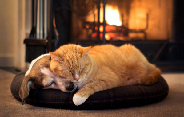 Keeping away the Winter Blues in Pets